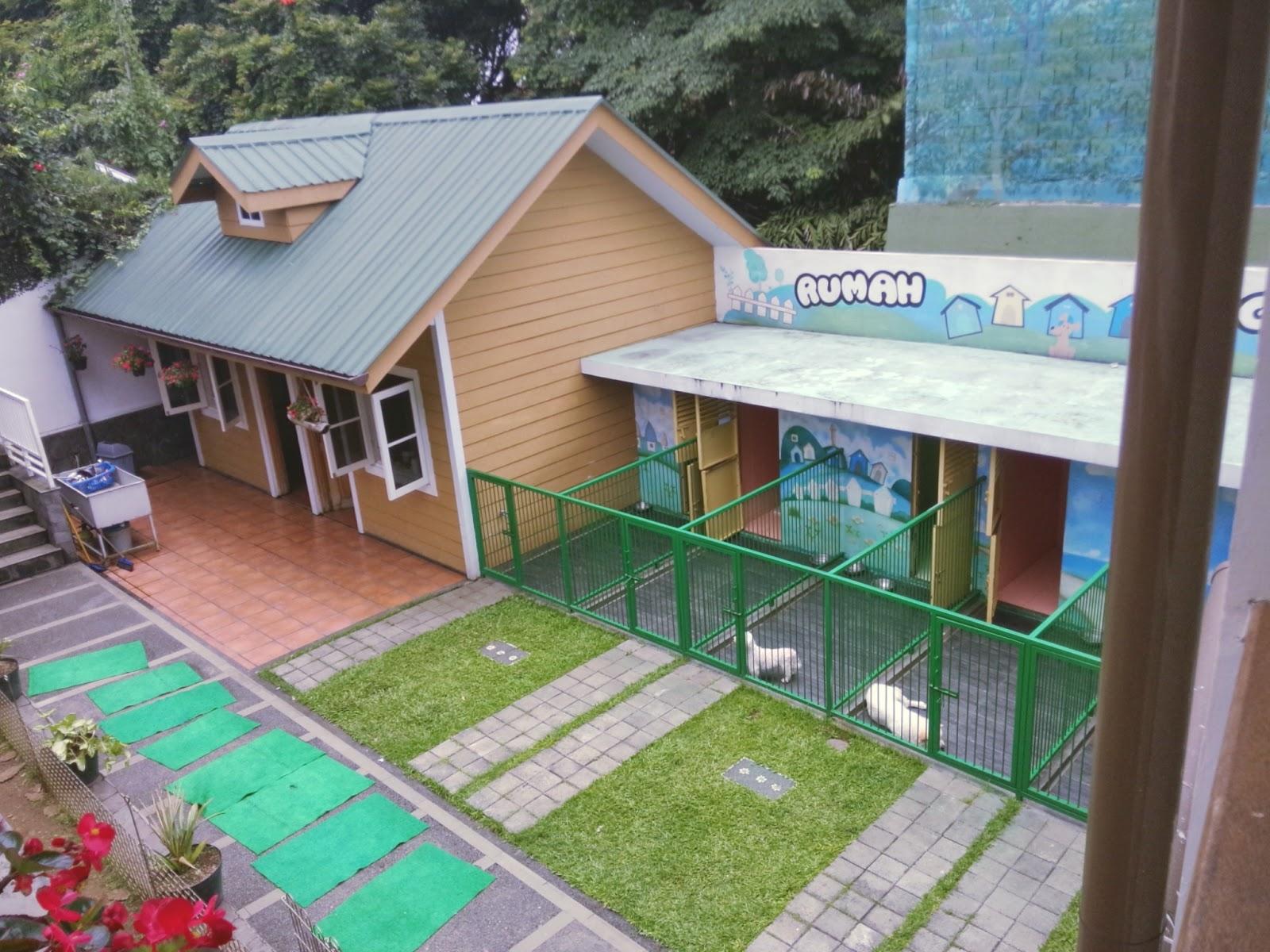 My Lovely Samoyed Review Of Rumah Guguk Petshop In Bandung