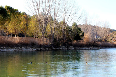 Qué ver en las lagunas de Ruidera. Laguna Redondilla