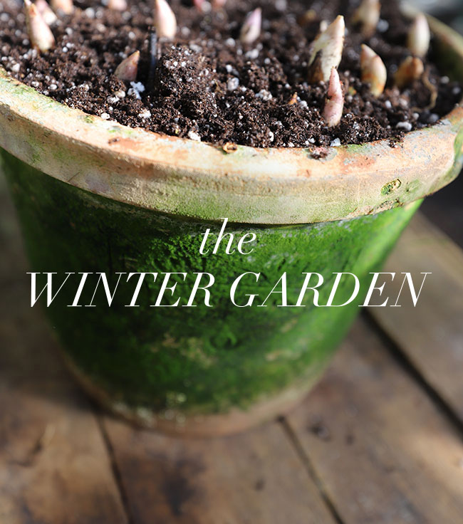 Winter Gardening Ramps Up - Book Reviews Pour In