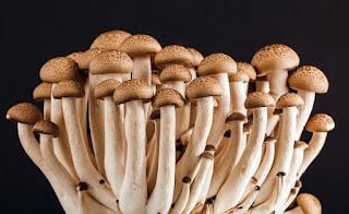 jamur panu