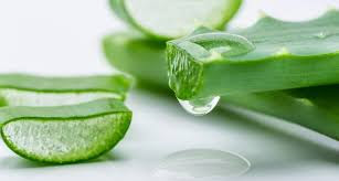 How to treat herpes with aloe vera