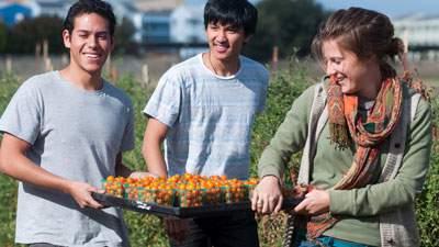 Hasil pertanian yang dilakukan oleh mahasiswa jurusan pertanian