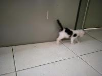 Kiko Catwalk