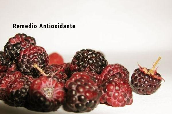 Este remedio Antioxidantes de Arrope con Moras proporciona grandes beneficios a nuestra salud