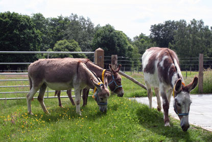 Three donkeys make the National Cat Centre their new home