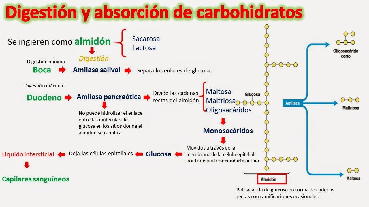Mejor medicina para acelerar metabolismo pastillas