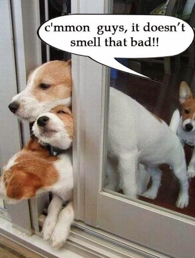 Funny dog escape fart joke picture - C'mmon guys, it doesn't smell that bad!!