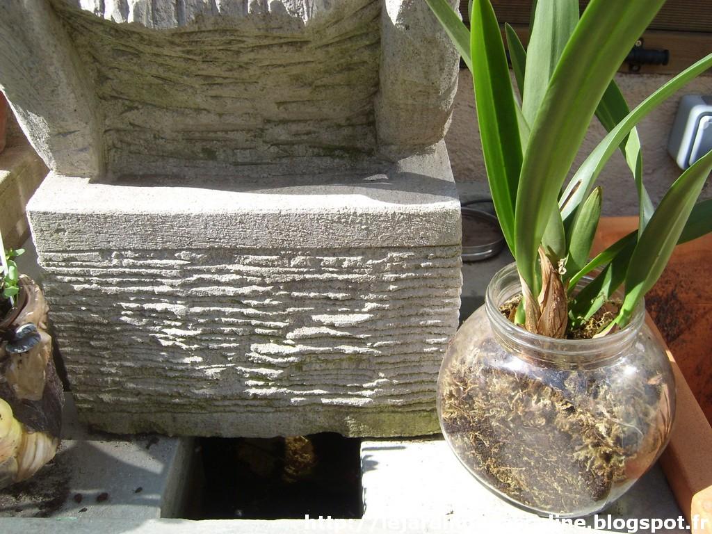 le jardin de pascaline rempotage des orchid es. Black Bedroom Furniture Sets. Home Design Ideas