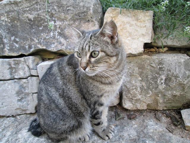 Animales urbanos: gatos, diciembre 2013 - Paseos Fotográficos Valencia