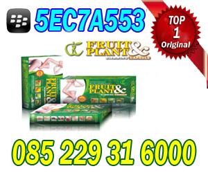 pelangsing fruit plant