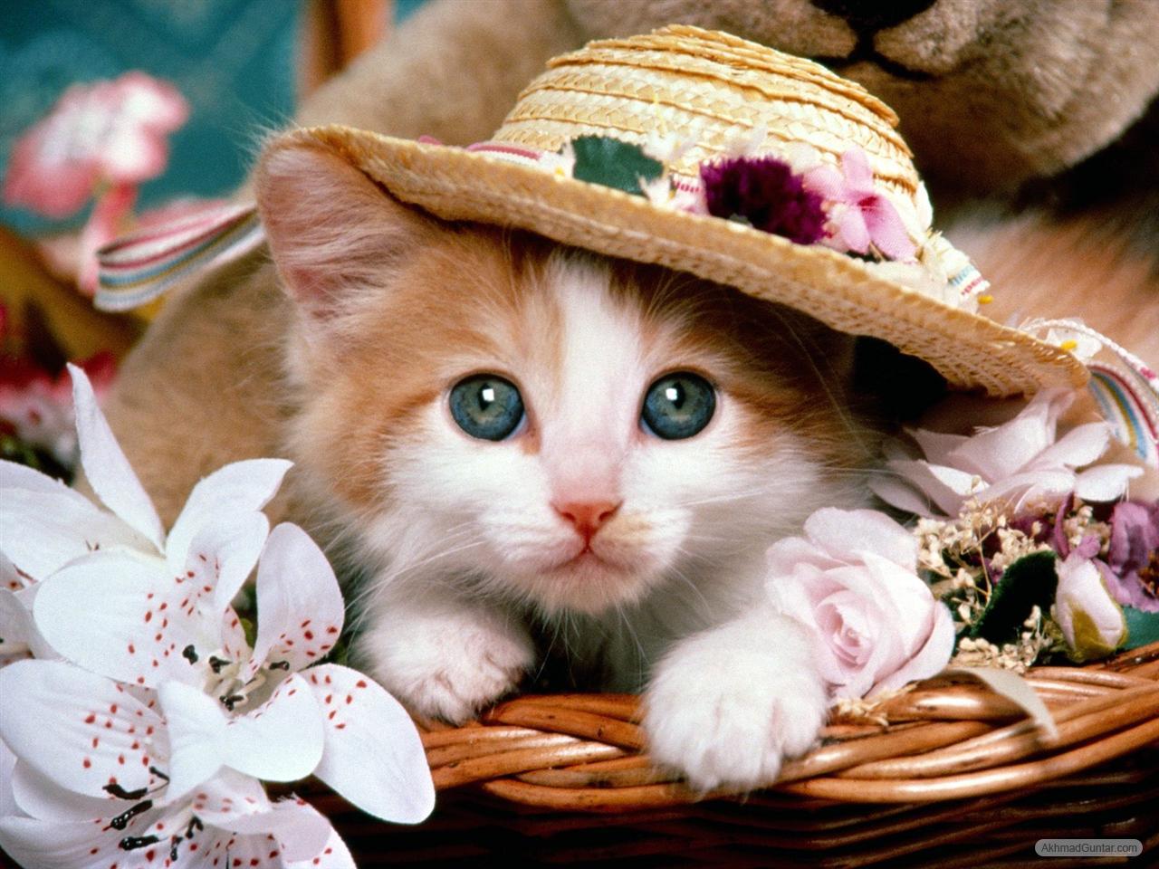 Gambar Kucing Comel Dan Lucu Kucingcomel Com