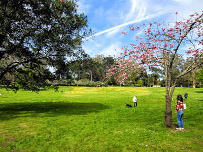 A girl looks at the sky under a sakura tree in San Francisco