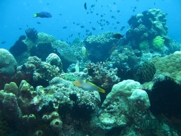 Diving in Apo Island near Dumaguete City