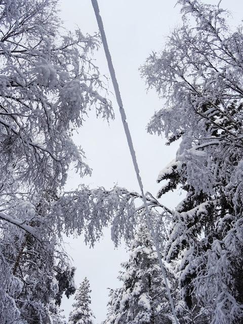 Talven ihmemaa ja puissa lunta