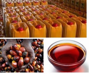 palm oil business in pictures