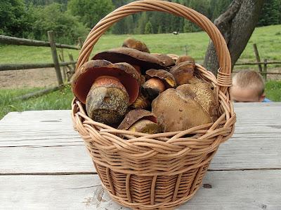 grzyby 2017, grzyby w czerwcu, grzyby na Orawie, borowik ceglastopory Boletus erythropus, muchomor mglejarka Amanita vaginata, gnieźnik leśny