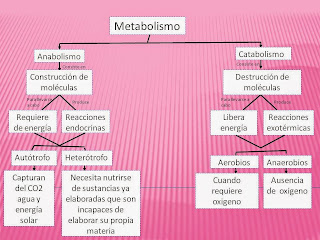 Tipos de metabolismo sin conducir a ti mismo en bucle