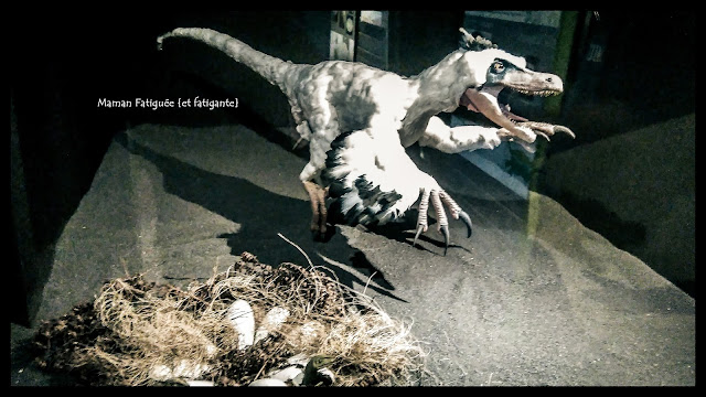 musée dinosaure esperaza