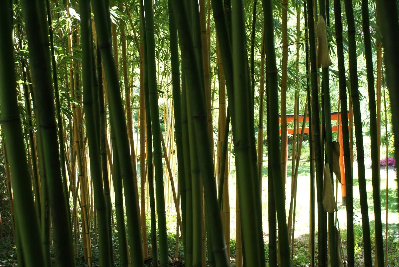 jardin zen erik borja bambouseraie torii