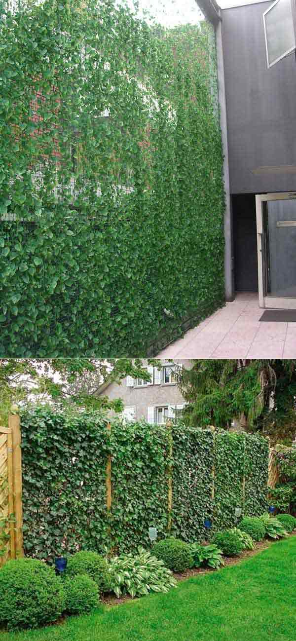 Add Privacy To Your Garden Or Yard With Plants Do It