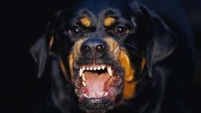 Top 10 raças de cães mais perigosos do mundo