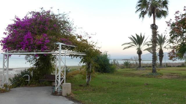 Im Vordergrund der Garten des Kibbuz, im Hintergrund der See Genezareth