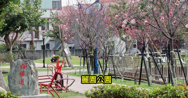 台中太平|麗園公園|300公尺櫻緣道賞櫻花|太平賞櫻好去處