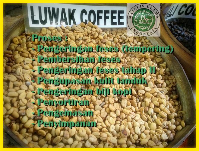 gambar gabah kopi luwak bersih hukum mui halal