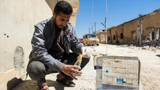 Siria: EEUU y Reino Unido envían sustancias tóxicas a terroristas