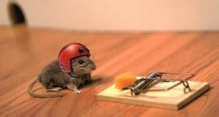 cara mengusir tikus dengan alat penangkap
