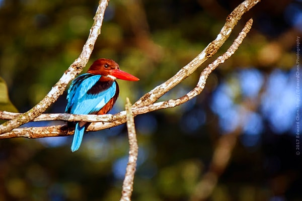 Bird Watching at Taman Botani Shah Alam