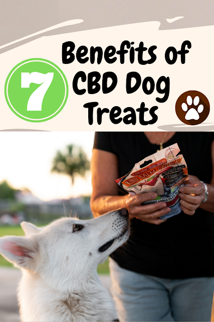 7 Benefits of CBD Dog Treats