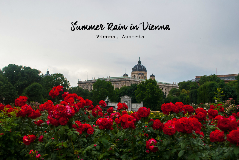 Summer roses and Hofbraug in vienna
