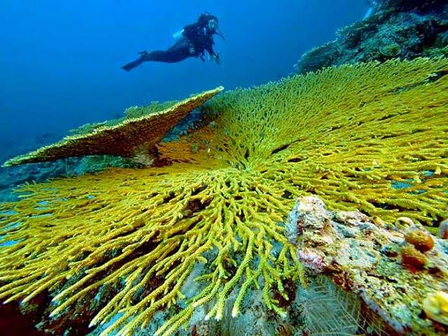 Kepulauan Togean