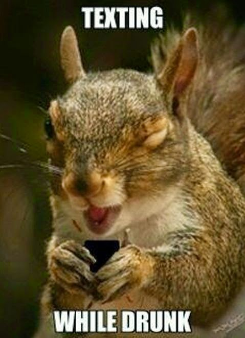 Funny Squirrel Texting While Drunk Joke Picture Meme