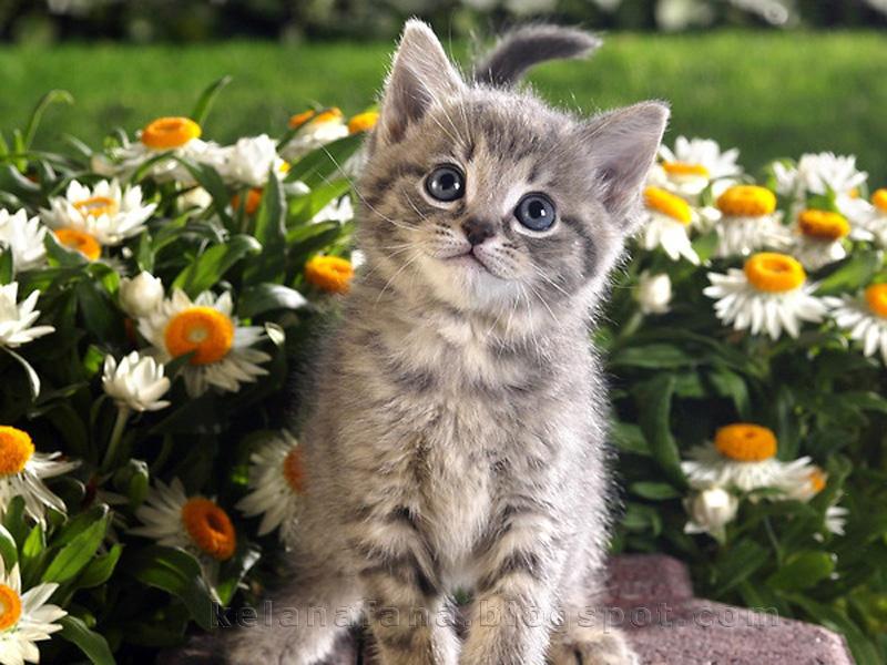 Kucing Comel vs Bunga Cantik