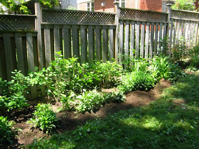 Toronto garden bed after cleanup weeded and edged by garden muses: a Toronto gardening blog