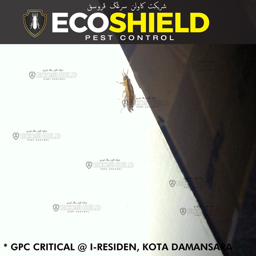 Eco Shield Pest Control Malaysia - General Pest Control
