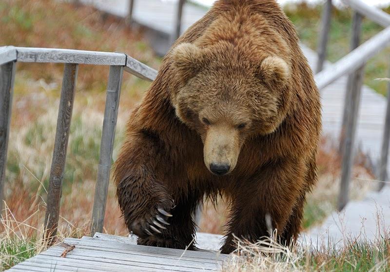 Памятка при встрече с медведем