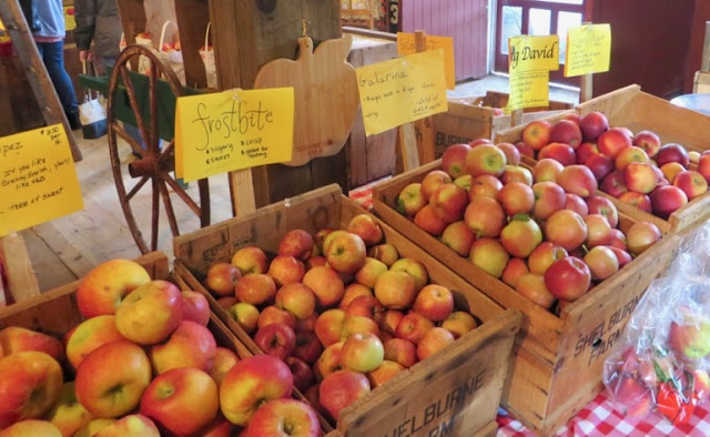 Heritage and other apples in wooden bins with little hand-written signs