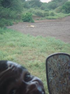 leijona, botswana, riitta reissaa, safari
