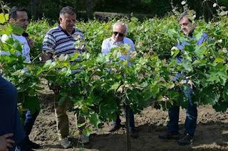 Επίσκεψη του Αντιπεριφερειάρχη Αγροτικής Ανάπτυξης Κ. Μητρόπουλου, σε καλλιέργειες Κορινθιακής Σταφίδας