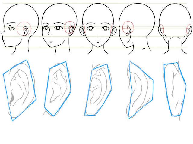préprarer les contours des oreilles
