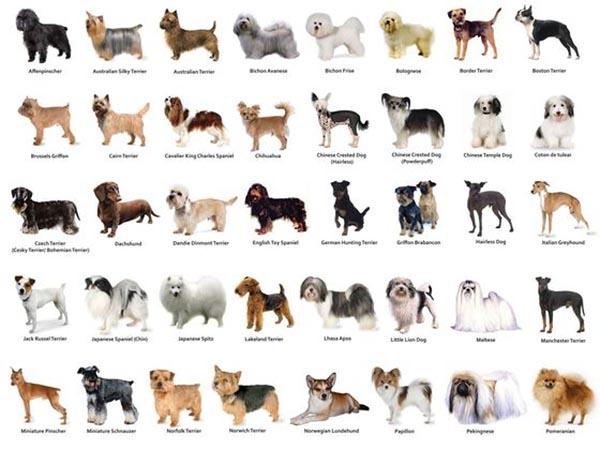 Hondenrassen - Lijst met alle soorten honden