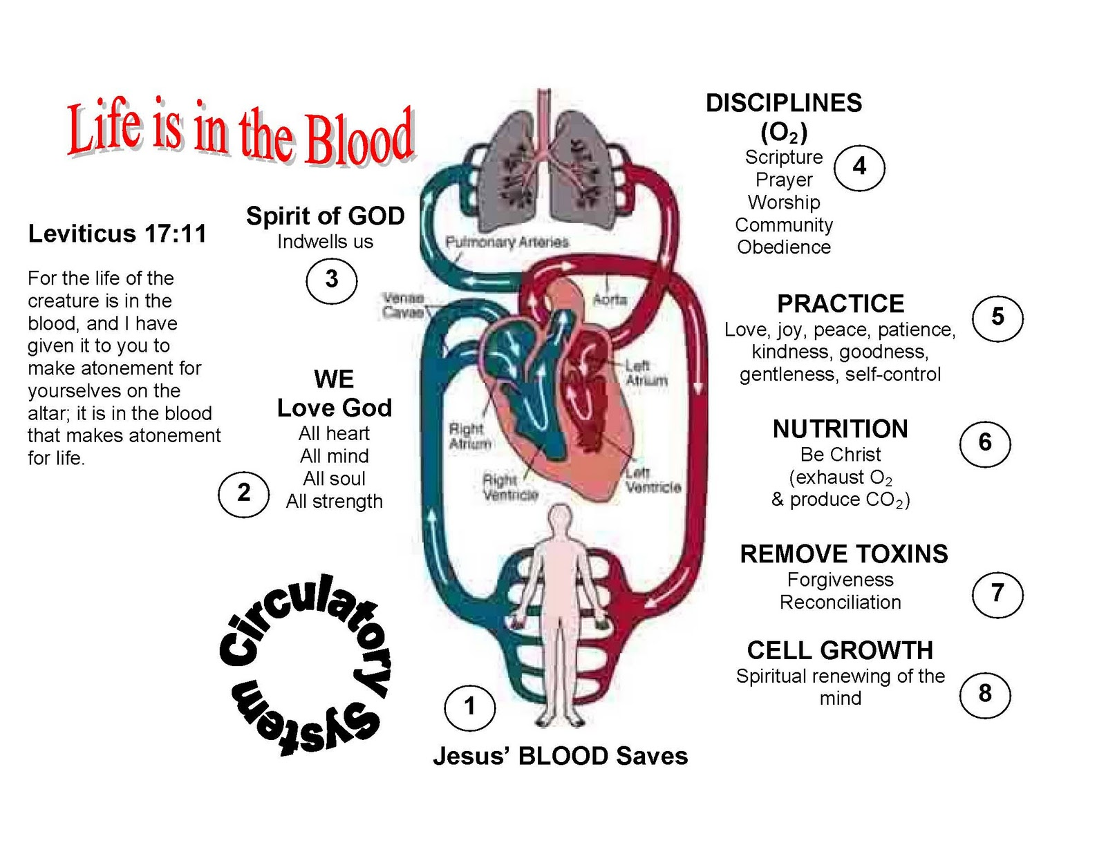 Human Circulatory System Without Labels