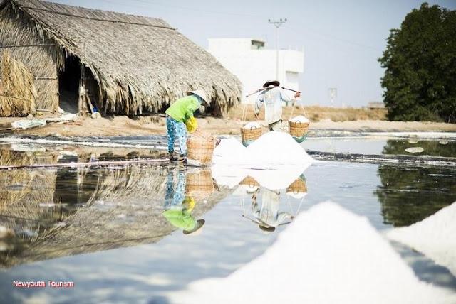 The salt fields near Van Phong Bay, Khanh Hoa province 11