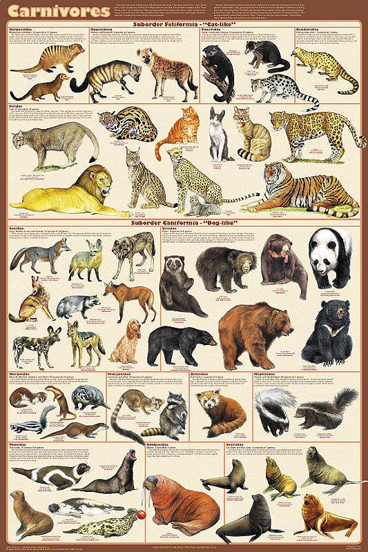 About Diversity...: Ecosystem