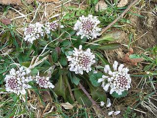 Φυτά που καθαρίζουν το έδαφος από βαρέα μέταλλα
