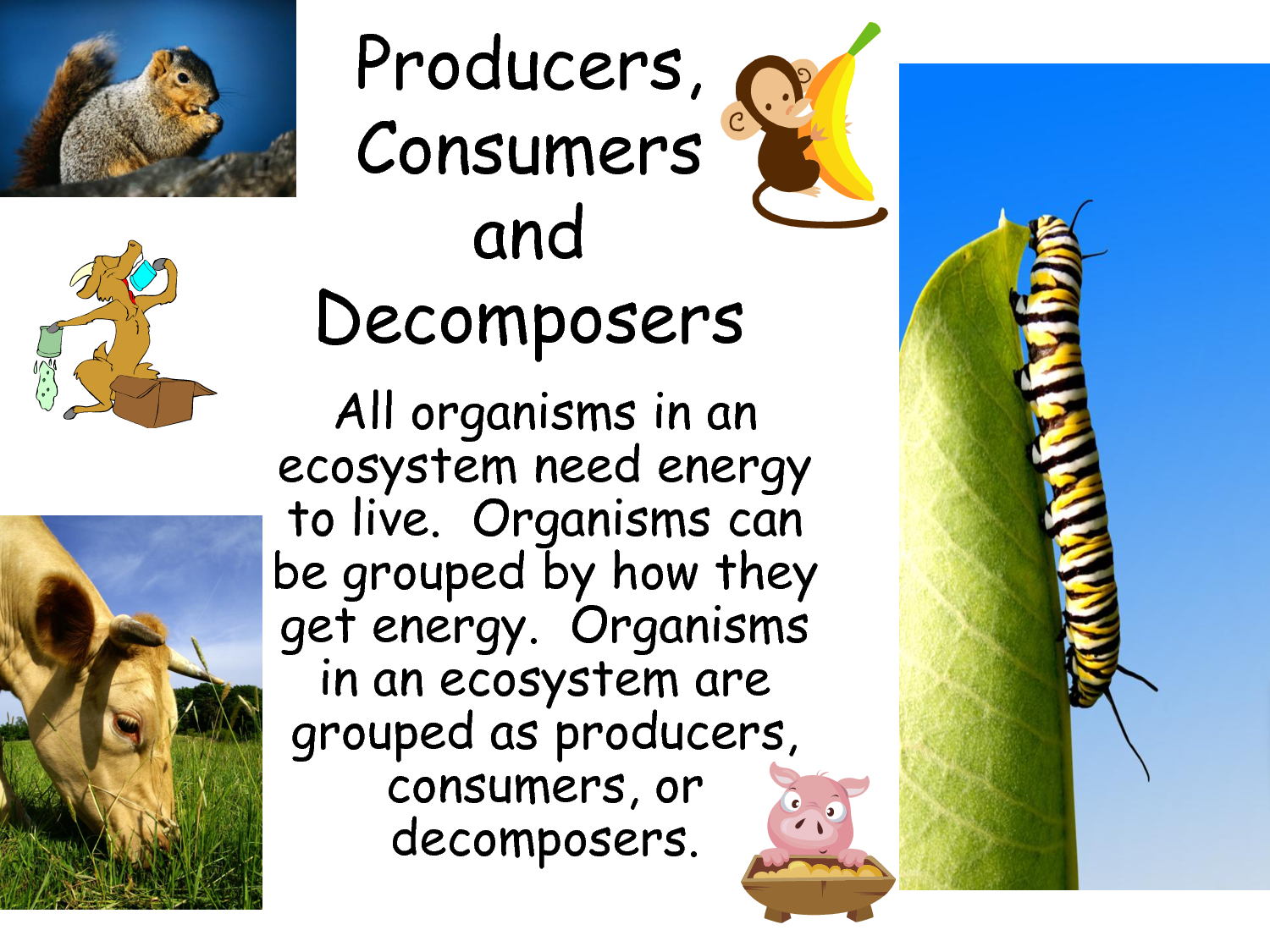 Do Organisms Make There Own Food In Photosynthesis