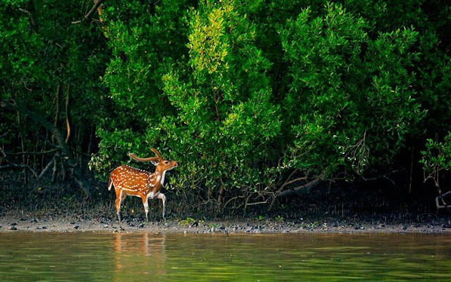 Beautiful Bangladesh , Beautiful Bangladesh Sundarban